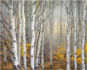 Birch Tree Grove
