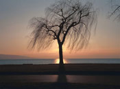Tree Image, Ebony Tree Sunset Picture