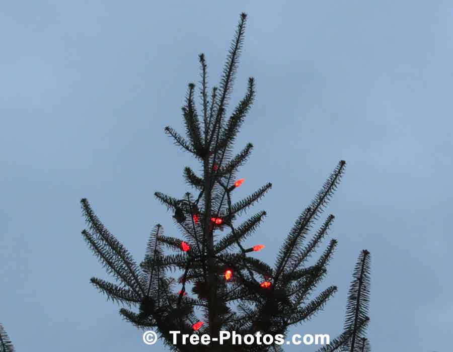Christmas Tree Topper Decorated With Red LED Lights