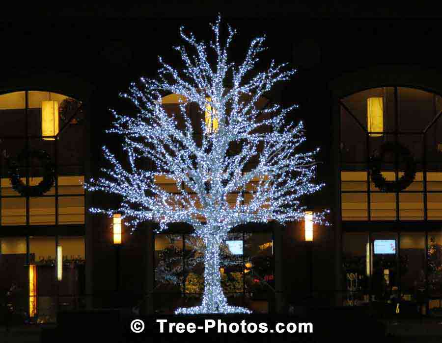 Christmas Tree Pictures Gallery