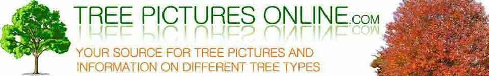 Trees: Pictures, Images, Photos, Pics of Tree Types
