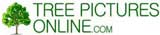Trees Pictures, Photos, Images at TreePicturesOnline.com