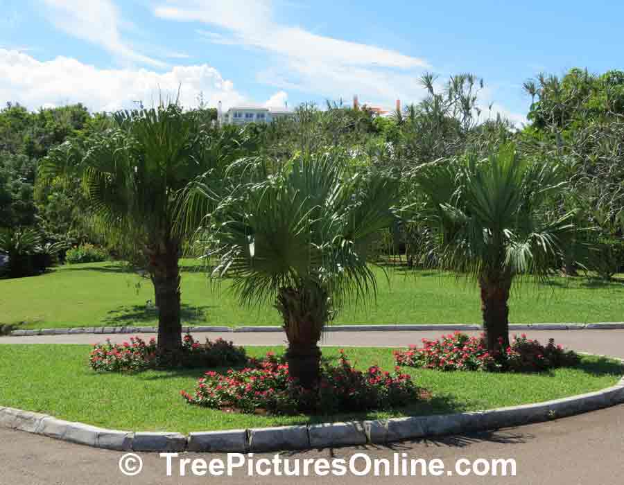Palm tree landscape design photo treepicturesonline for Garden design with palms