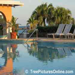 Palms: Pool Side-Palme-Landschaft