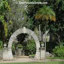Palm Trees: Palm Tree Landscaping with Moongate Decorative Feature, Bermuda