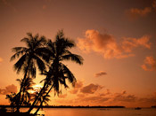 Palm Trees Sunset Photograph