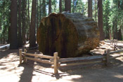 sequoia log